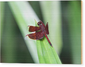 Wood Print featuring the photograph Red Dragon by Shoal Hollingsworth