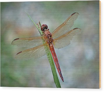 Wood Print featuring the photograph Red Dragonfly by Linda Brown