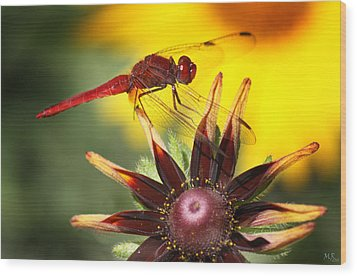Red Dragonfly Wood Print by Martina  Rathgens