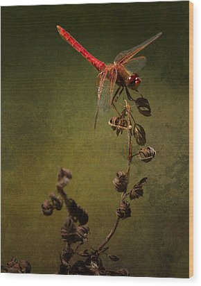 Red Dragonfly On A Dead Plant Wood Print