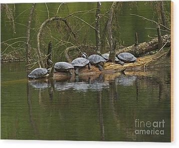 Red-eared Slider Turtles Wood Print