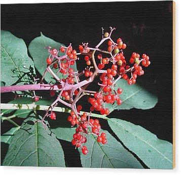 Red Elderberry Wood Print by Cheryl Hoyle