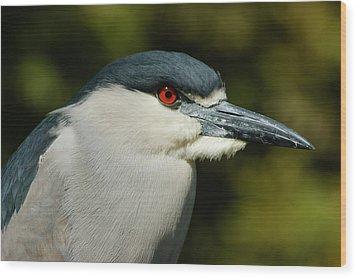 Wood Print featuring the photograph Red Eye - Black-crowned Night Heron Portrait by Georgia Mizuleva