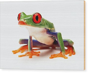 Red-eye Tree Frog 1 Wood Print by Lanjee Chee