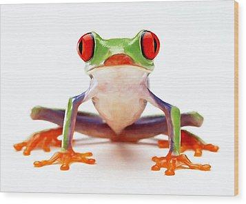 Red-eye Tree Frog 2 Wood Print by Lanjee Chee