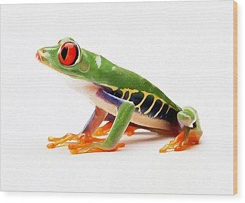 Red-eye Tree Frog 4 Wood Print by Lanjee Chee