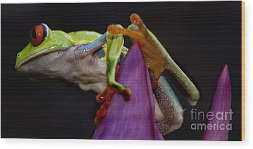 Red Eyed Tree Frog Wood Print by Bob Christopher