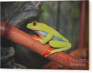 Wood Print featuring the photograph Red Eyed Tree Frog by Cathy  Beharriell