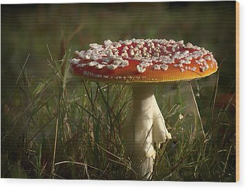 Red Fairy Mushroom Wood Print by Shirley Mitchell