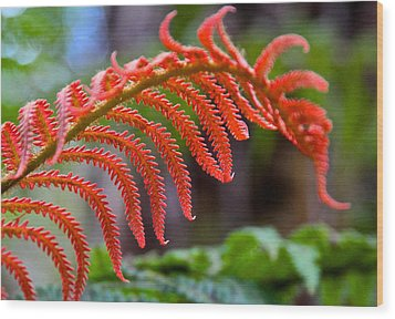 Autumn Fern In Hawaii Wood Print by Venetia Featherstone-Witty