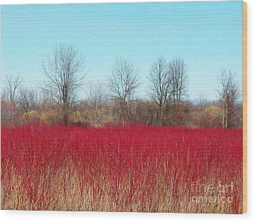 Red Fields Wood Print by Judy Via-Wolff