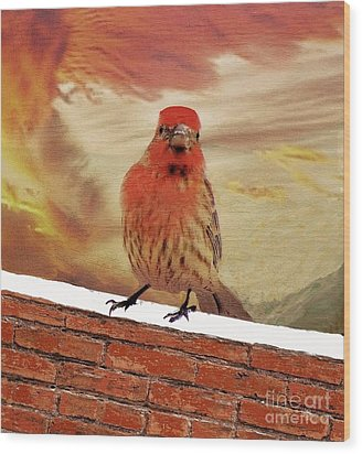 Red Finch On Red Brick Wood Print