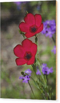 Red Flax  Wood Print by Saija  Lehtonen