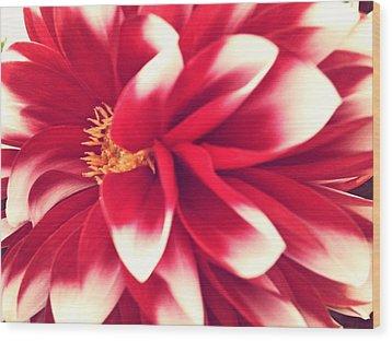 Red Flower Wood Print by Beril Sirmacek