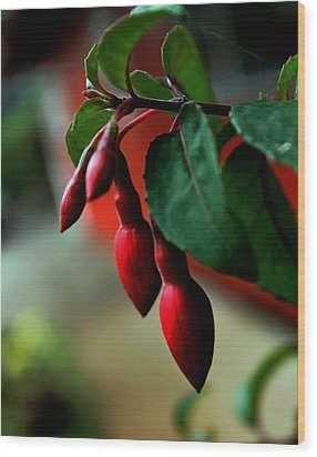 Red Flower Buds Wood Print by Pamela Walton