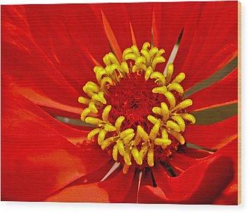 Red Flower Wood Print by Eva Kondzialkiewicz