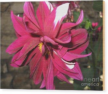 Red Flower In Bloom Wood Print
