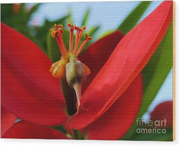 Red Flower Wood Print by Kristine Merc