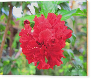 Wood Print featuring the photograph Red Flower by Sergey Lukashin