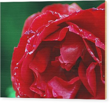Wood Print featuring the photograph Red Flower Wet by Matt Harang