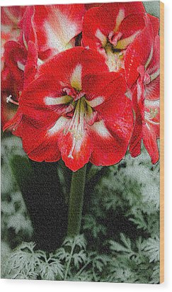 Red Flower With Starburst Wood Print by Crystal Wightman