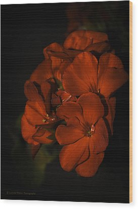 Wood Print featuring the photograph Red Flowers In Evening Light by Lucinda Walter