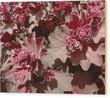 Wood Print featuring the photograph Red Flowers by Laurie Tsemak