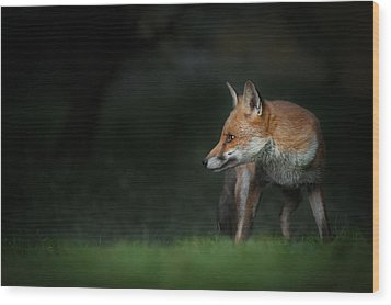 Red Fox Wood Print by Andy Astbury