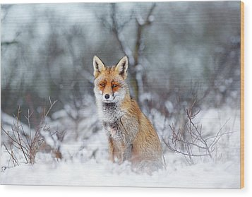 Red Fox Blue World Wood Print by Roeselien Raimond