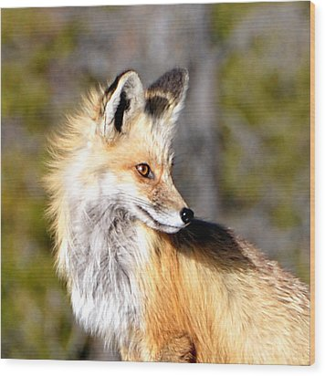 Red Fox Face Wood Print