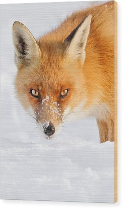 Red Fox In The Snow Wood Print by Roeselien Raimond