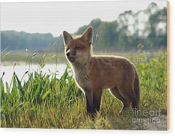 Red Fox Kit Wood Print by Olivier Le Queinec
