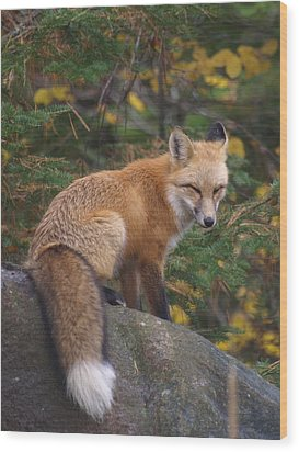 Wood Print featuring the photograph Red Fox by James Peterson