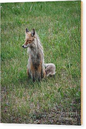 Red Fox Portrait Wood Print by Robert Bales