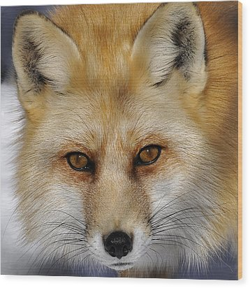 Red Fox Portrait Wood Print by Rodney Campbell