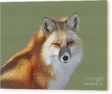 Red Fox Wood Print by Rodney Campbell