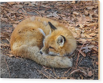 Wood Print featuring the photograph Red Fox  by Trace Kittrell