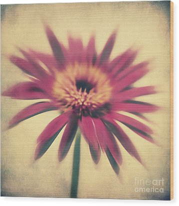 Red Gerbera Wood Print by Angela Doelling AD DESIGN Photo and PhotoArt