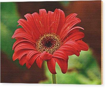 Red Gerbera Flower Wood Print by Johnson Moya