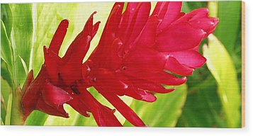 Red Ginger Flower Wood Print by James Temple