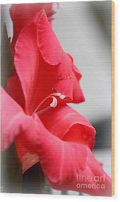 Lady In Red Wood Print by Patti Whitten