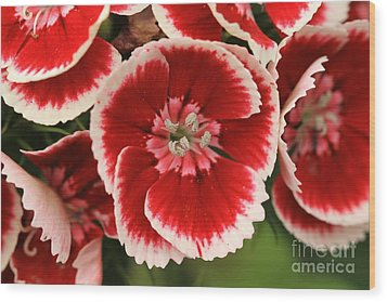 Red Glory All Profits Go To Hospice Of The Calumet Area Wood Print