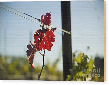 Red Grape Leaves Wood Print by Charmian Vistaunet