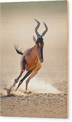 Red Hartebeest Running Wood Print by Johan Swanepoel