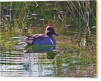 Wood Print featuring the photograph Red Headed Duck by Susan Garren