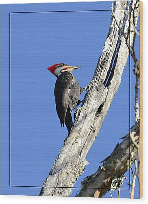 Red Headed Woodpecker Wood Print by Susan Leggett