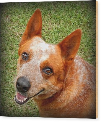 Red Heeler Wood Print by Lynn Griffin