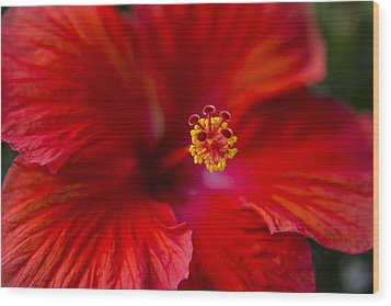 Red Hibiscus Wood Print by Eduard Moldoveanu
