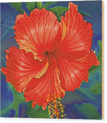 Red Hibiscus Flower Wood Print by Jane Schnetlage