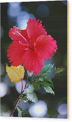 Red Hibiscus Flower Wood Print by Michelle Wrighton
